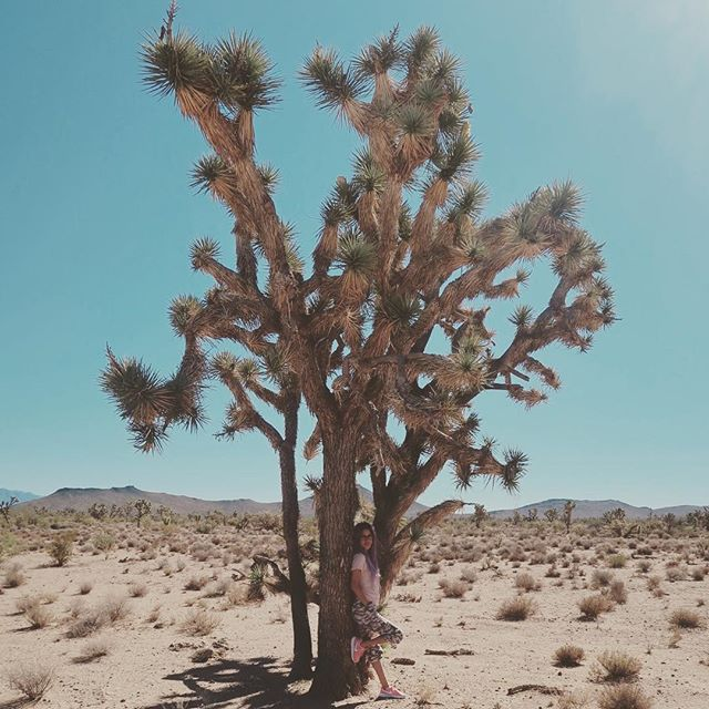 I now understand why people say they go to the dessert to find themselves. It truly is a spiritual place. It was by far one of my favorite things that Bossman and I have ever done together. #joshuatree