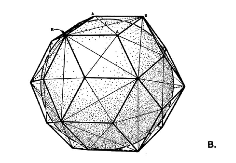 Fig. 986.405 B - Division of a face of the Rhombic Triacontahedron into four triangels
