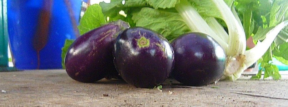 All hail the veggie bounty...