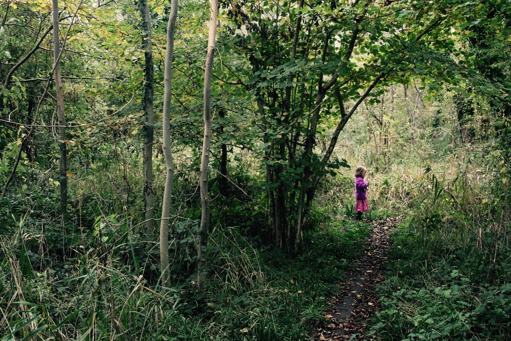 Fordham Wet Woods