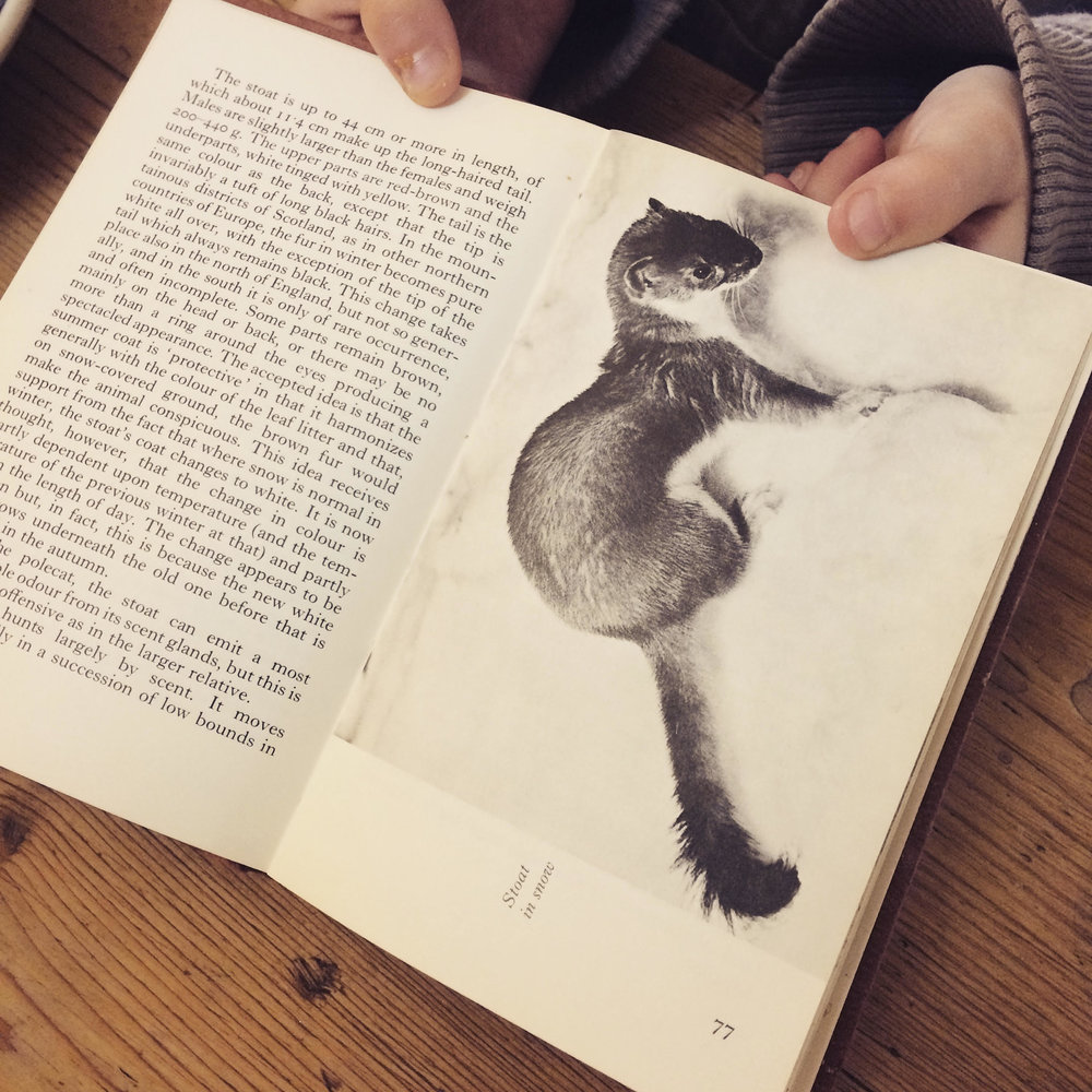 'My daughter's favourite book' the Observers Guide to Wild Animals of the British Isles . Photograph for Carly Butler.