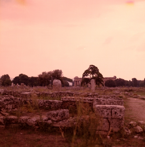 Paestum  - Medium Format photograph . William McDonald - 2011.