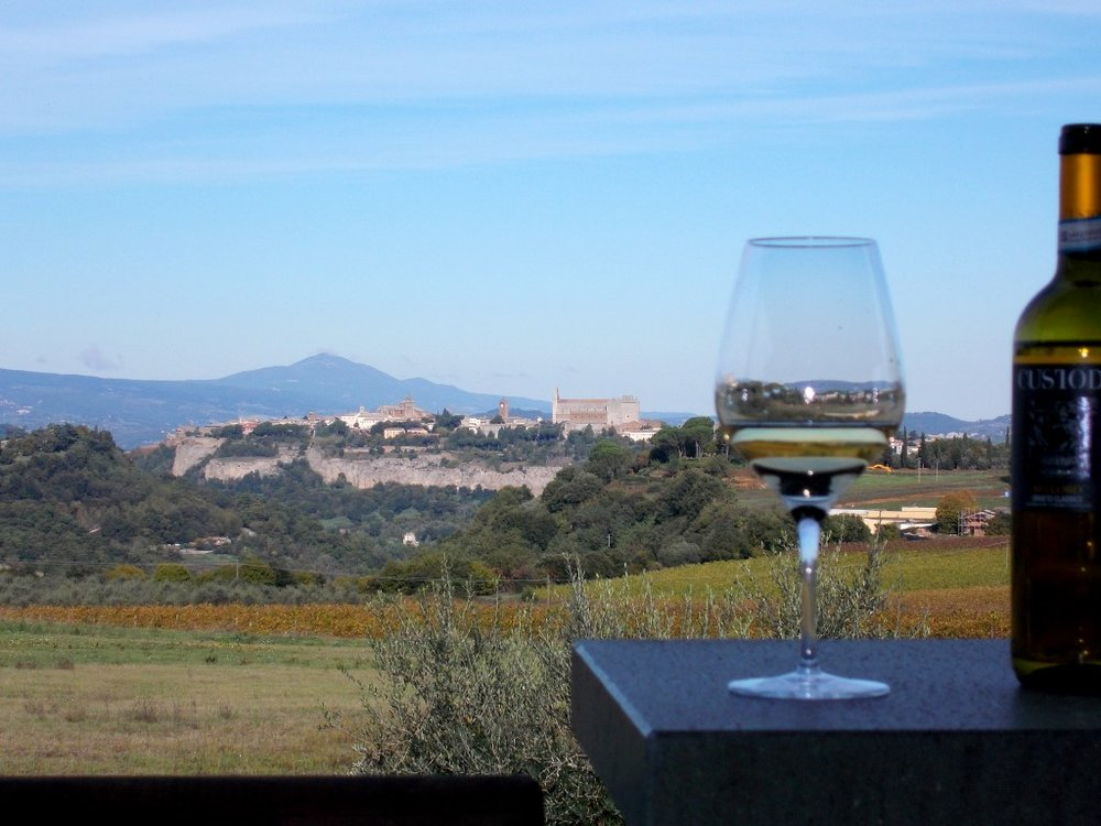Custodi vineyard Orvieto. tastetrailsrome.com