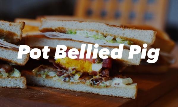pot bellied pigs1.jpg