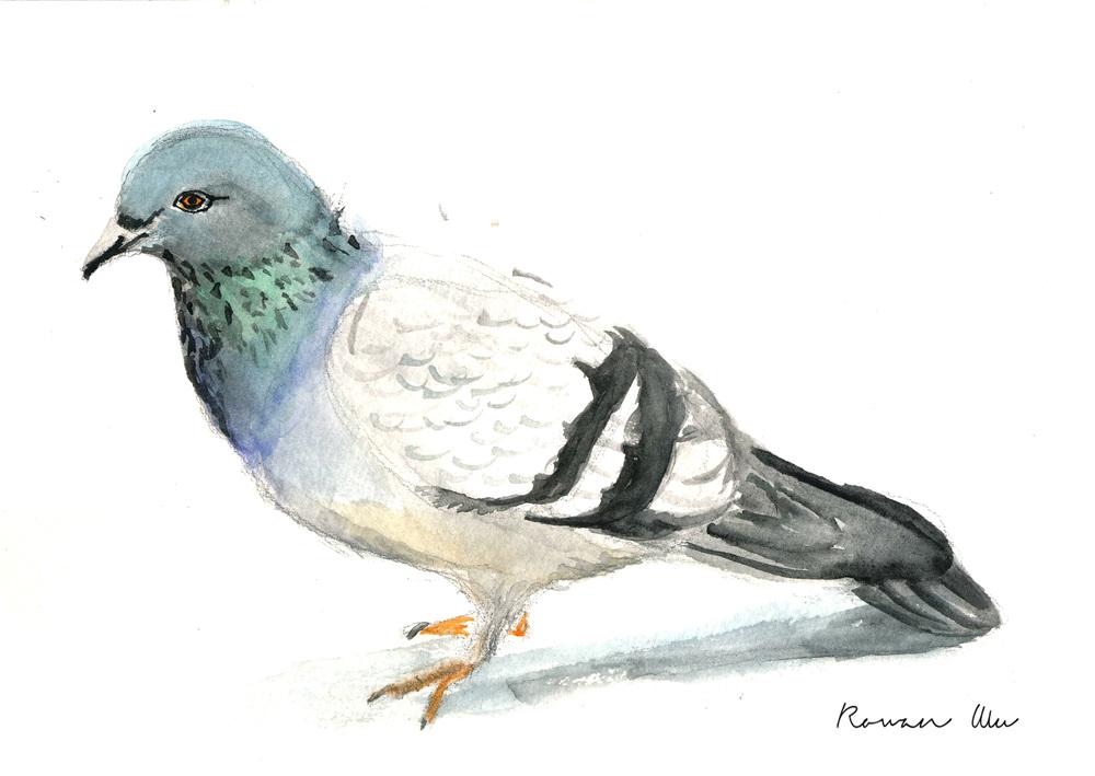 Pigeon1 copy.jpg
