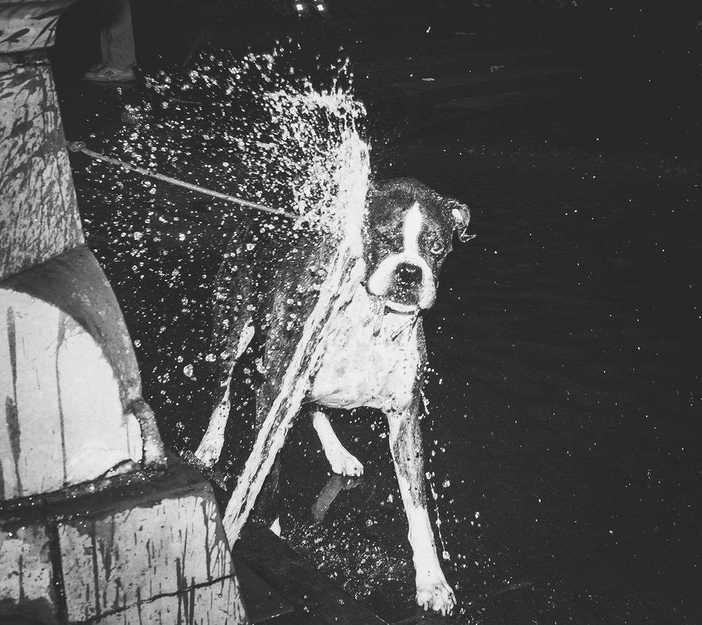 Water vs Hound.jpg