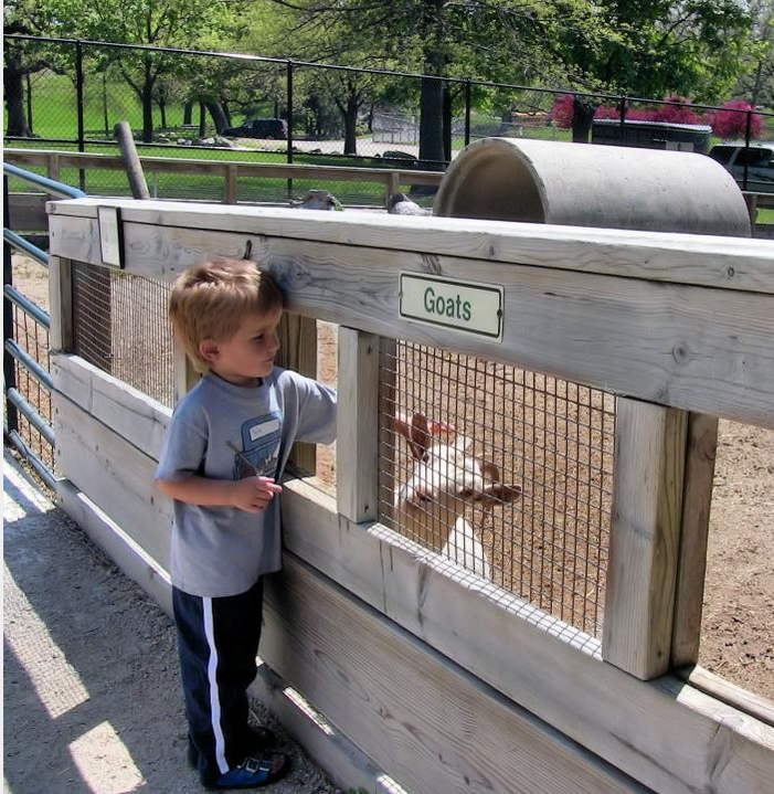 Kid visiting petting zoo