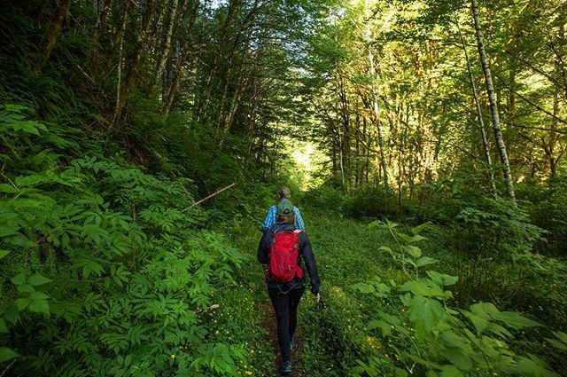 Following friends along a somewhat forgotten section of the Salmonberry River Trail.  #salmonberry #salmonberryriver #salmonberryrivertrail #oregonexplored #exploreoregon #exploreportland #bestoforegoncoast #ferns #backpacker #hikingadventures #lostandfound #pnwlife #pnwonderland #tillamookstateforest #tillamook #liked #followmeto #darkwoods #springawakening #coastrange #hiker