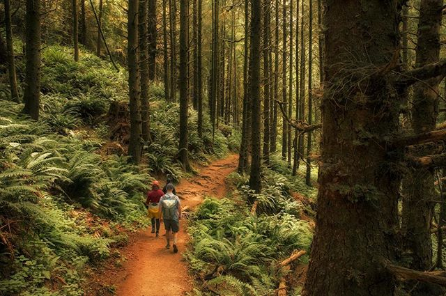 Wandering along the coastal forests of Ecola. - . - #traveloregon #getoutside #hikelover #adventurepups #exploreoregon #oregon #rei1440project #backpacking #backpacker #oregonwild #liked #followmeto #ecolastatepark #travelholic #instawild #pnwonderland #pnwcollective #pnwlife #westcoast_exposures #bestoforegon #bestoforegoncoast #bestcoast