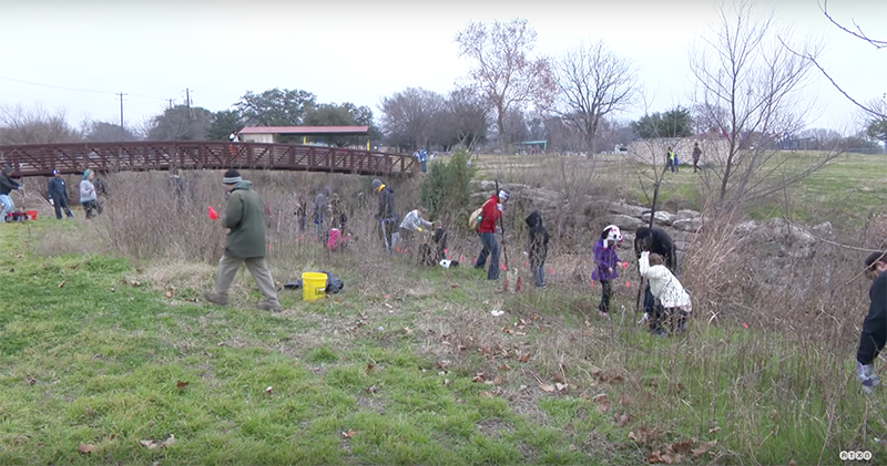 "The City of Austin is working to restore the native forests that used to flourish beside creeks by creating ""grow zones"" in city parks. In these areas, the City of Austin stops mowing and volunteers, birds, and squirrels help plant native seeds and seedlings."