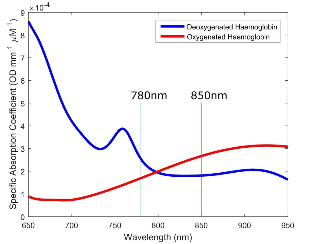 The specific absorption spectra of oxygenated and deoxygenated haemoglobin. The Gowerlabs NTS Optical Imaging System employs two wavelengths of near-infrared light (usually 780nm and 850nm though 685 nm and 850nm is also common) to allow changes in the concentration of both forms of haemoglobin to be measured. See section 'A Window to the Brain' for more details. Tissue spectra courtesy of UCL's Biomedical Optics Research Laboratory. (Click to enlarge)