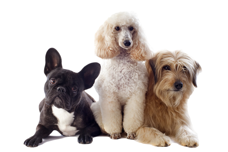 dogs-transparent.png