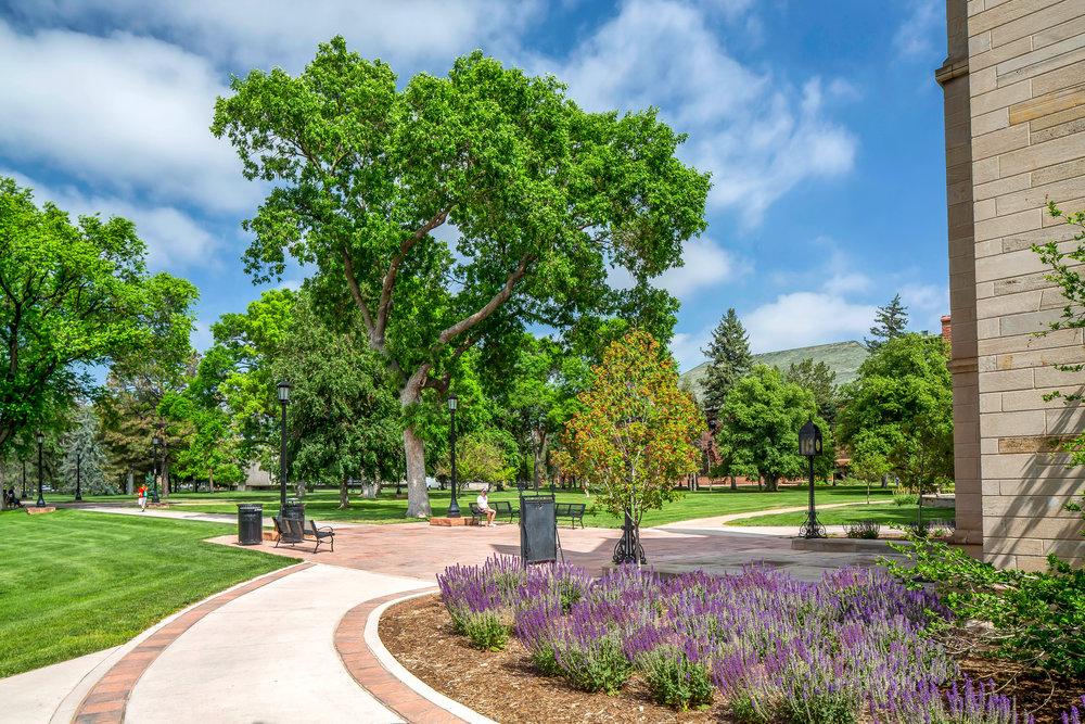 "<img src=""studioINSITE_Colorado_College_CutlerHall""alt=""Long Range Development Plan, Historic Renovation, Science Building, Arts Center, Colorado Springs, Colorado, Colorado, College,Landscape Architecture, Urban Design, Master Planning, studioINSITE"" title=""Colorado College""/>"