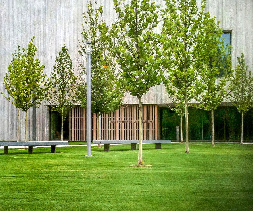 "<img src="" studioINSITE_Clyfford Still Museum_Trees and Lawn ""alt=""Clyfford Still Musuem, Denver, Cultural Museum, Art Museum, Celebration, History, Historical Art, Urban Environments, Art Centers, Joel Shapiro, For Jennifer, Artist, Visionary  "" title=""  Clyfford Still Musuem  ""/>"