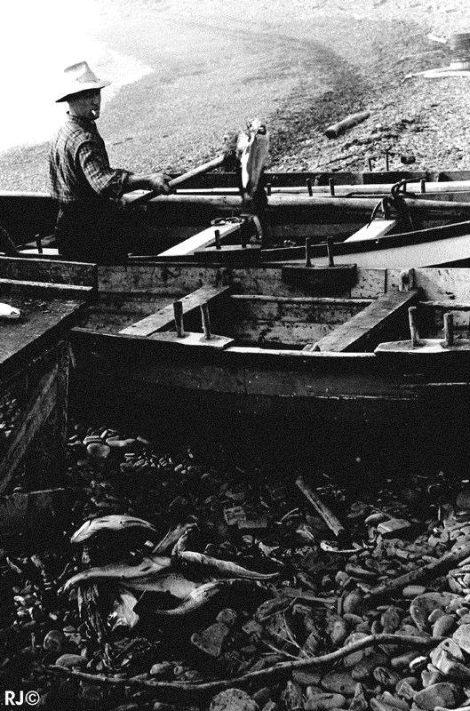 Fishing boats - Gaspé, 1954