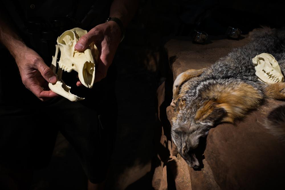 Deer skulls, Zion.