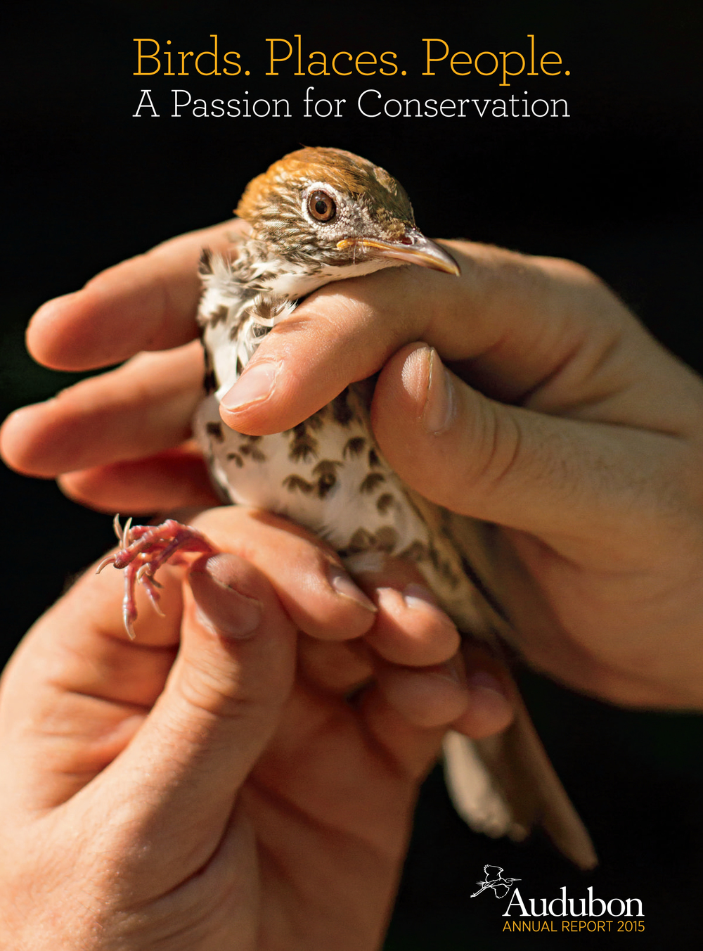 Wood Thrush Tagging in NC