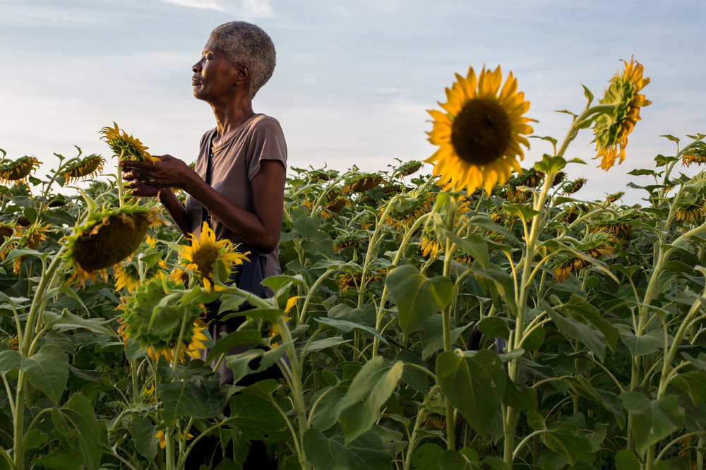 Joslin Simms in Field of Sunflowers