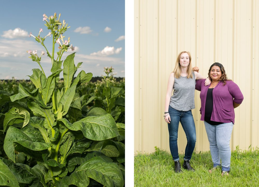 Left: Tobacco blooms near Wilson, N.C. Right: Catherine Crowe, 23, and Sintia Castillo, 24, who work with the Farm Labor Organizing Committee (Floc), which advocates for tobacco pickers in eastern North Carolina. For The Guardian.