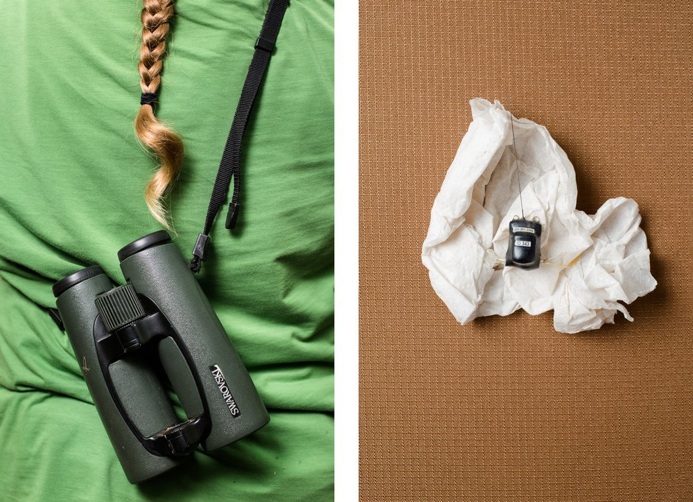 Binoculars and a GPS collar used to track Wood Thrush movements.