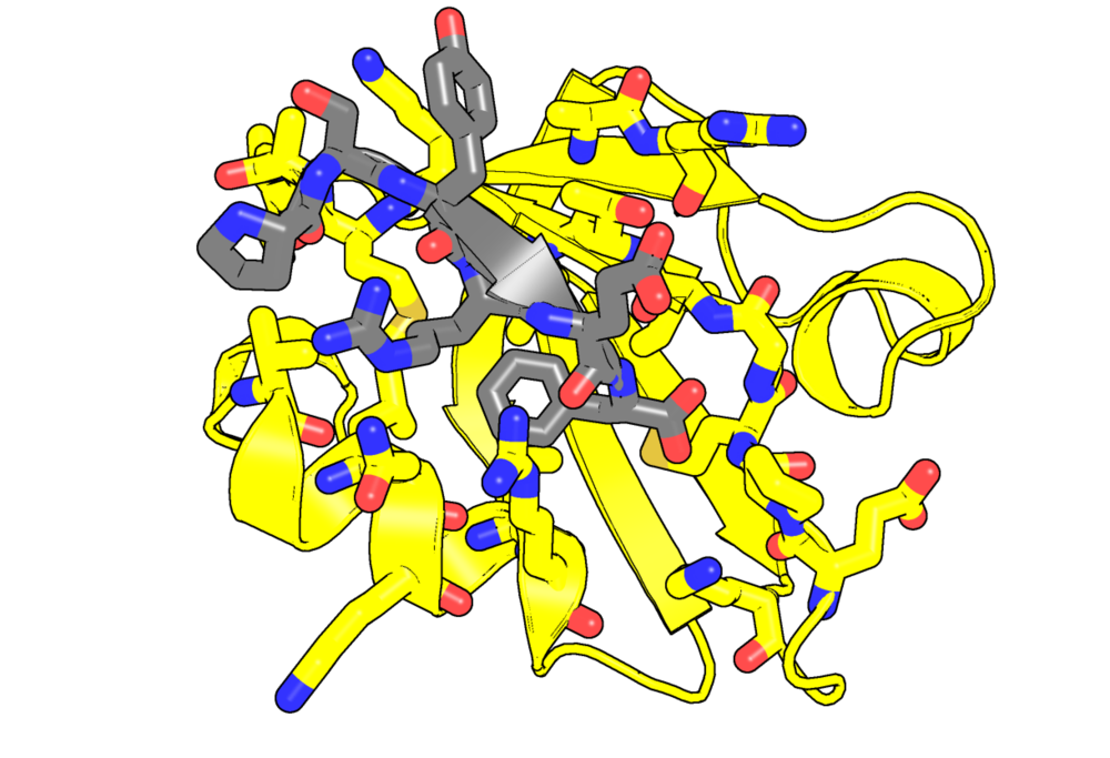 PDZ-peptide-funky 3[1].png