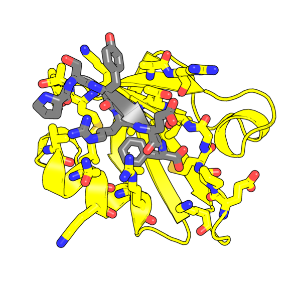 A computationally-designed inhibitor molecule (gray) interacts snuggly with its target domain (yellow) to prevent cancer-promoting activities.