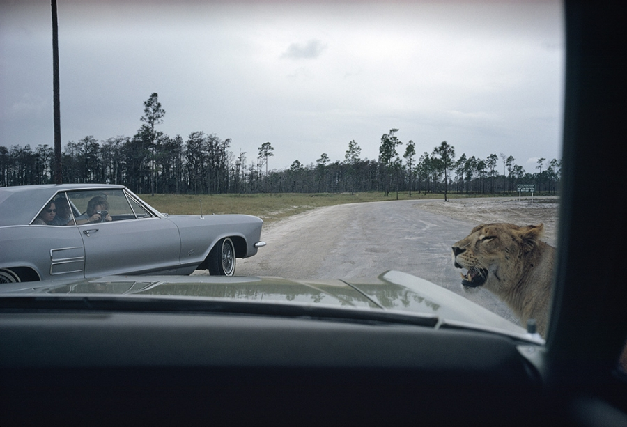 Florida (1970) © Joel Meyerowitz via  Oxford American