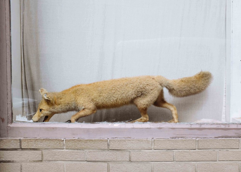 FEIXA_A stuffed fox_2.jpg