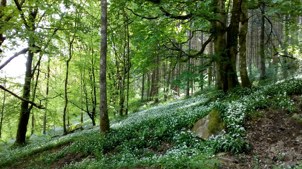 Woods on the Isle of Arron, Scotland. Photo by our friend Neil May