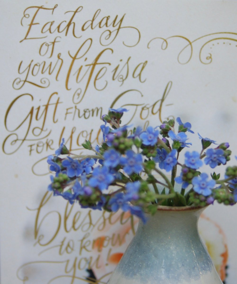 Forget-me-nots from my German Street garden       My response is to get down on my knees before the Father, this magnificent Father who parcels out all heaven and earth. I ask Him to strengthen you by His Spirit -- not a brute   strength but a glorious inner strength -- that Christ will live in you as you open the door and invite Him in. And I ask Him that with both feet planted firmly on Love you'll be able to take in the extravagant dimensions of Christ's love. Reach out and experience the breadth! Test its length! Plumb the depths! Rise to the heights! Live full lives, full in the fullness of God.      God can do anything, you know -- far more than you could ever imagine or guess or request in your wildest dreams! He does it not by pushing us around but by working within us, His Spirit deeply and gently within us.    Ephesians 3:14-20 (Message Translation)
