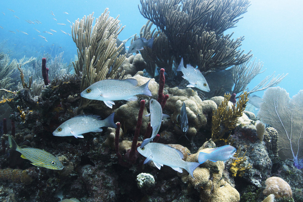 Thanks to collaborative conservation efforts, fish and coral populations at Laughing Bird Caye remain abundant.