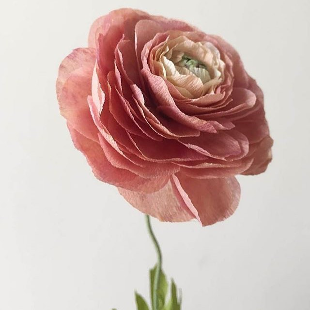 Here's to strong women - may we know them, may we be them, may we raise them. Happy Mother's Day to all you strong, lovely mothers! 💐📸: @goldenagebotanicals