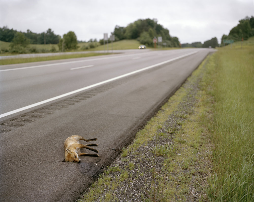 Dead-Fox-James-A.-Rhodes-Appalachian-Highway-Vinton-County-OH.jpg