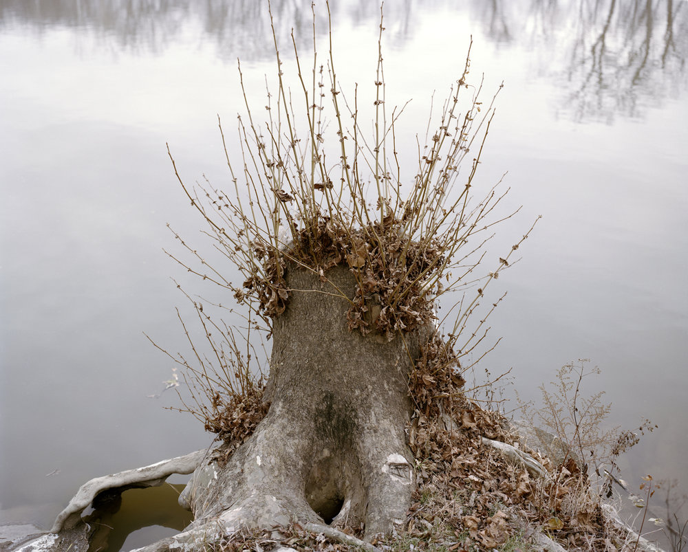 Stump-Great-Miami-River-Hamilton-OH.jpg