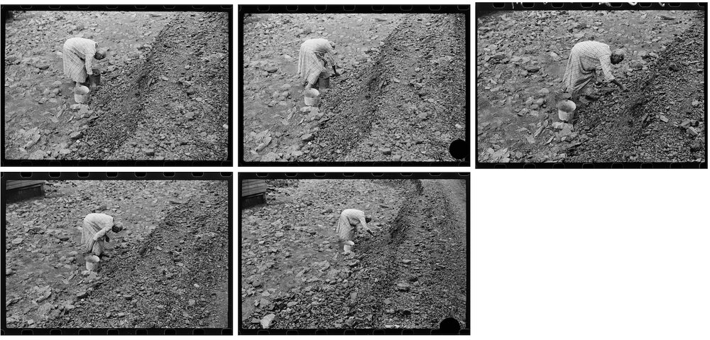 The series of five photographs made by Marion Post Wolcott of the woman picking coal from a slate dump in West Virginia in September 1938. Note the middle two images, which bear the evidence of Roy Stryker's hole punch.