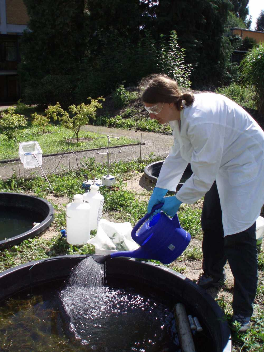 mesocosm study with the fungicide pyrimethanil