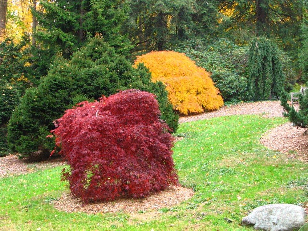 Conifer Garden.jpg