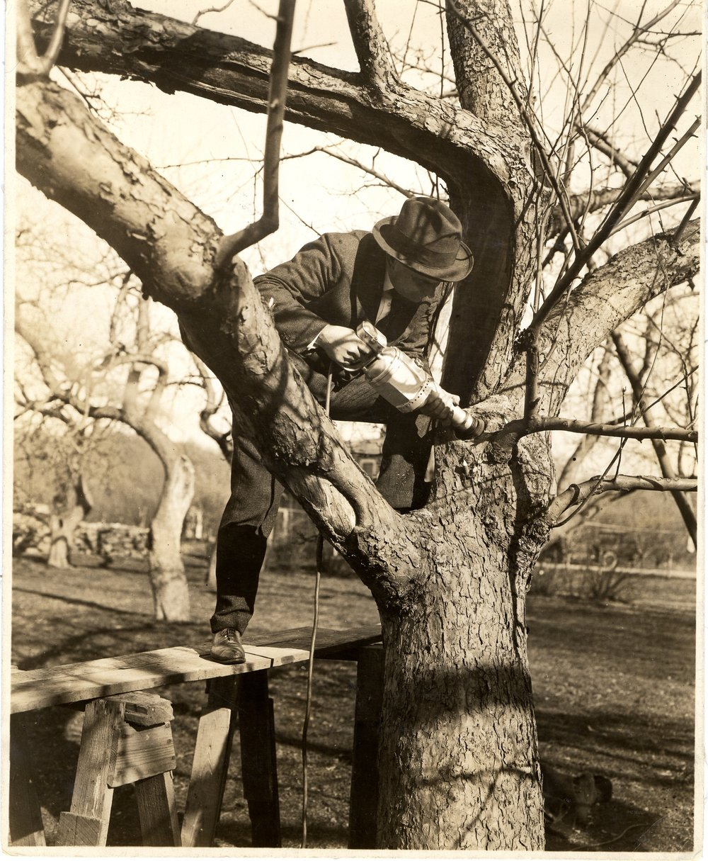 Bartlett Historical Tree Treatment.jpg