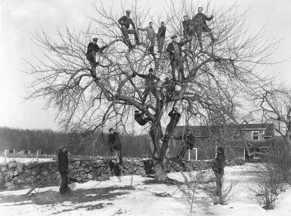 Employees in Tree Historical.jpg