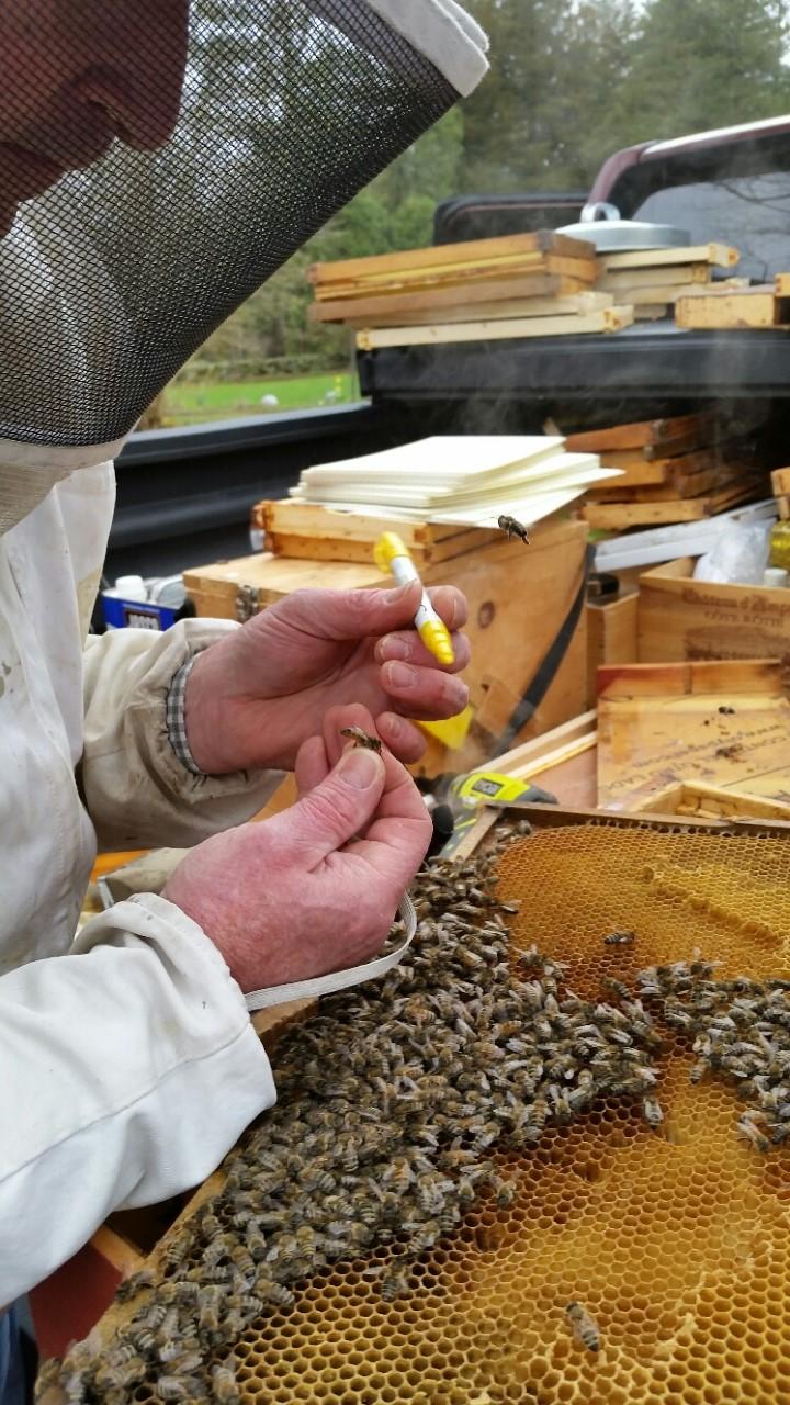Bartlett\'s Honeybees — Bartlett Arboretum & Gardens