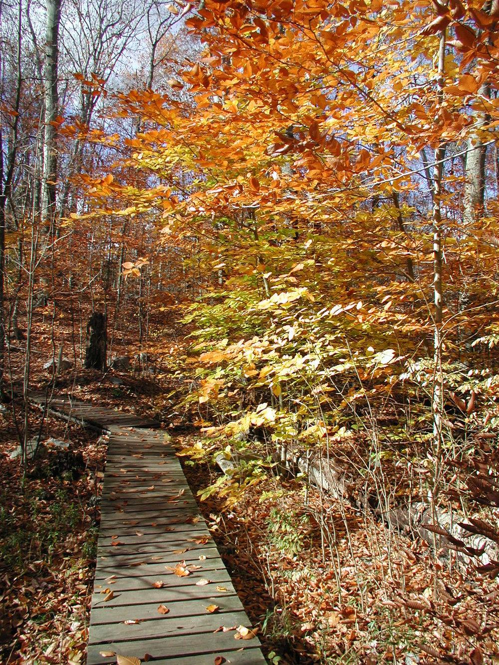 Fall Foliage Tour — Bartlett Arboretum & Gardens
