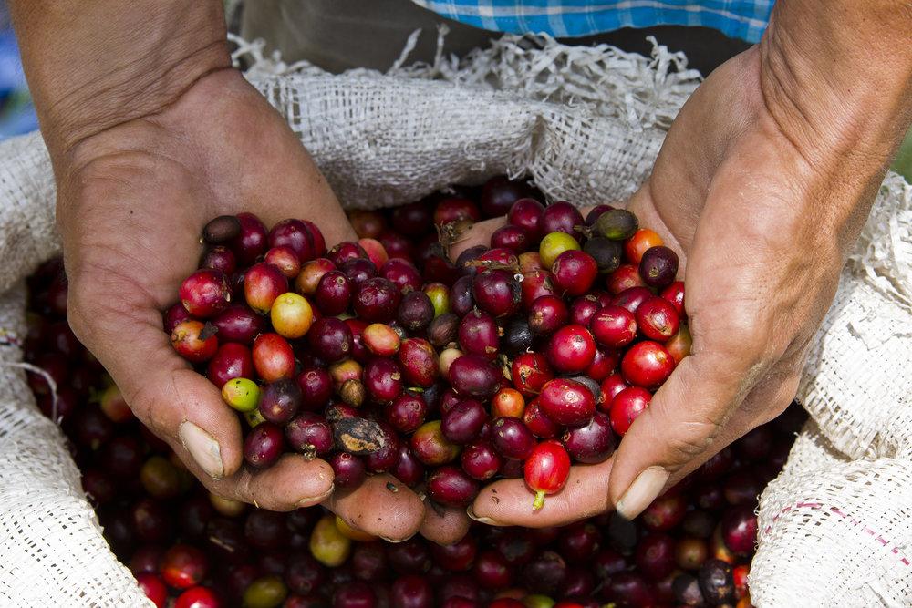 Coffee Hands Boris.jpg