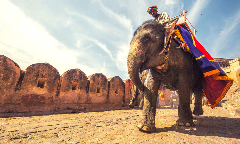 Elephant taxi, Amber Fort