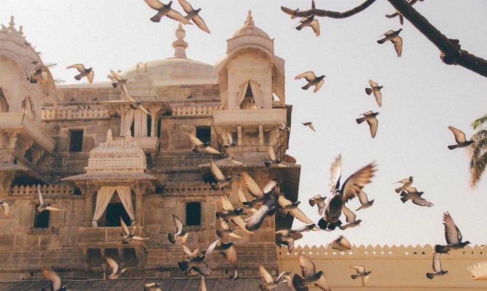 Flock of pigeons, Jaipur