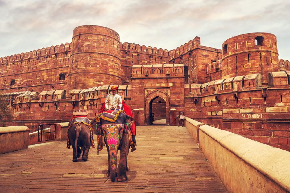 Go on an Elephant Safari at the magnificent Amer Fort