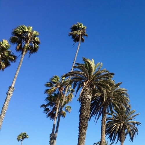 Beautiful blue skies... and yet more palm trees