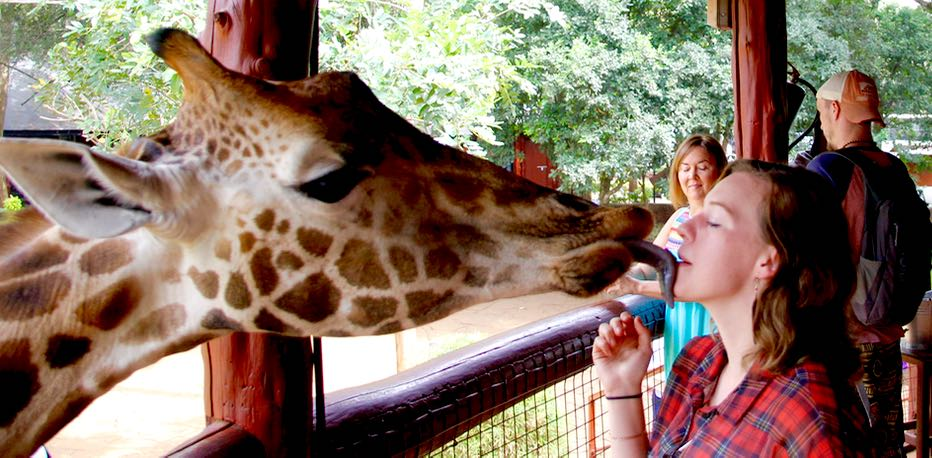 Getting a giraffe smooch