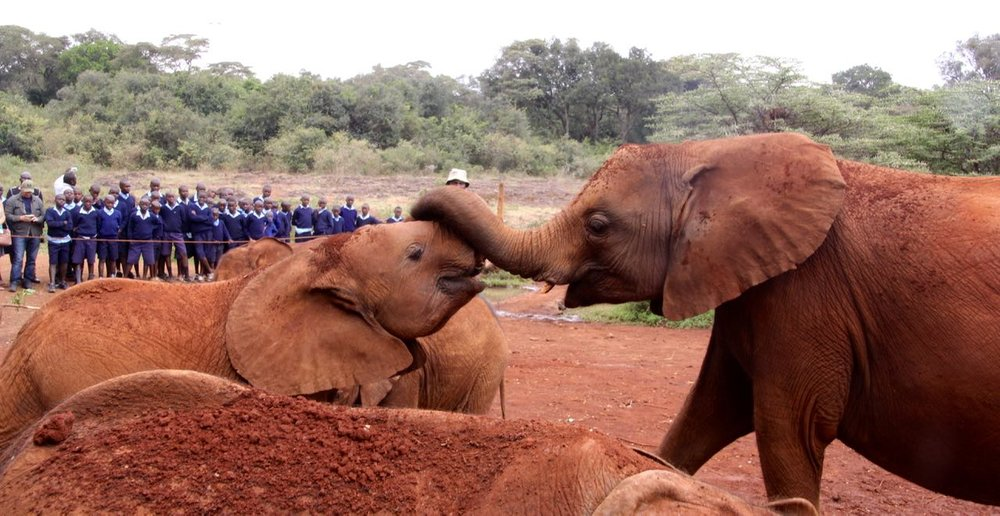 Adorable elephants at Sheldrick's Elephant Orphanage