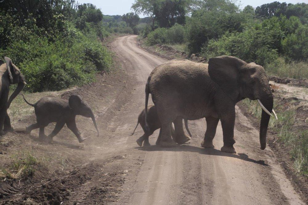 55 elephant crossing.jpg