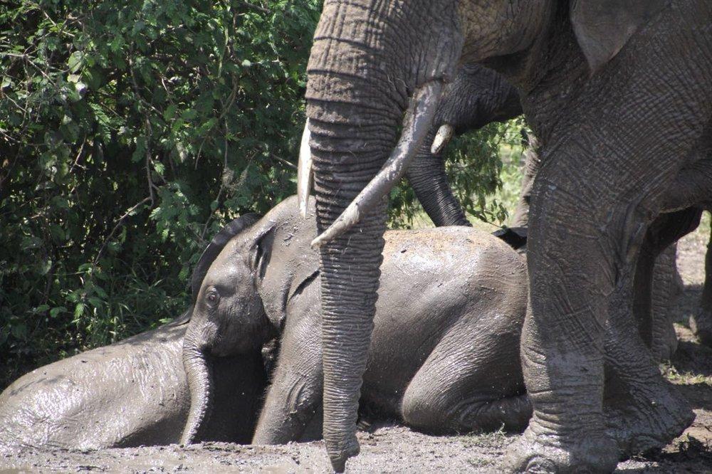 60 elephants.jpg